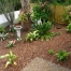Garden beds, a wonderful collection of plants and drip watering system, Morpeth