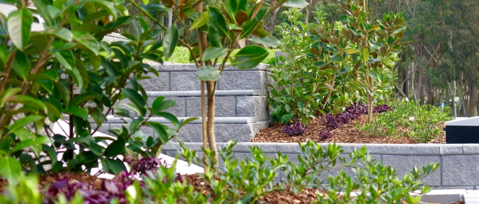 Looking along the garden beds atop the Tasman Block walls in Fletcher