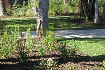Native plants in a Novascape garden in Murray's Beach